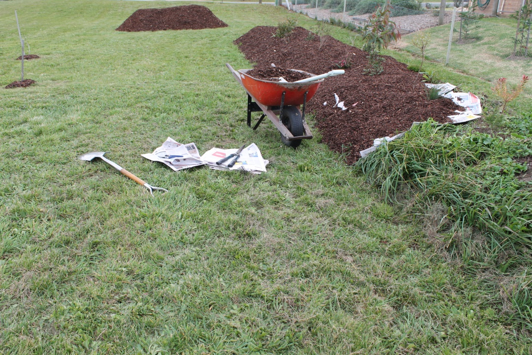 Mulching Our Strip of Australian Natives May 2014