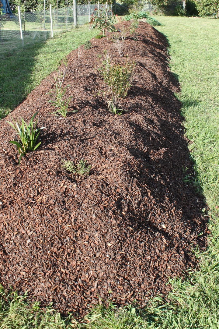 Our strip of Australian native screening plants in May 2014