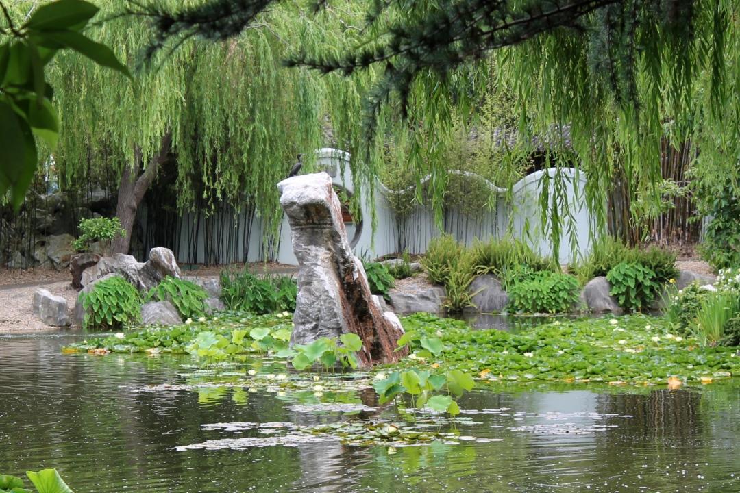 Sydney Chinese Gardens, photo 6.