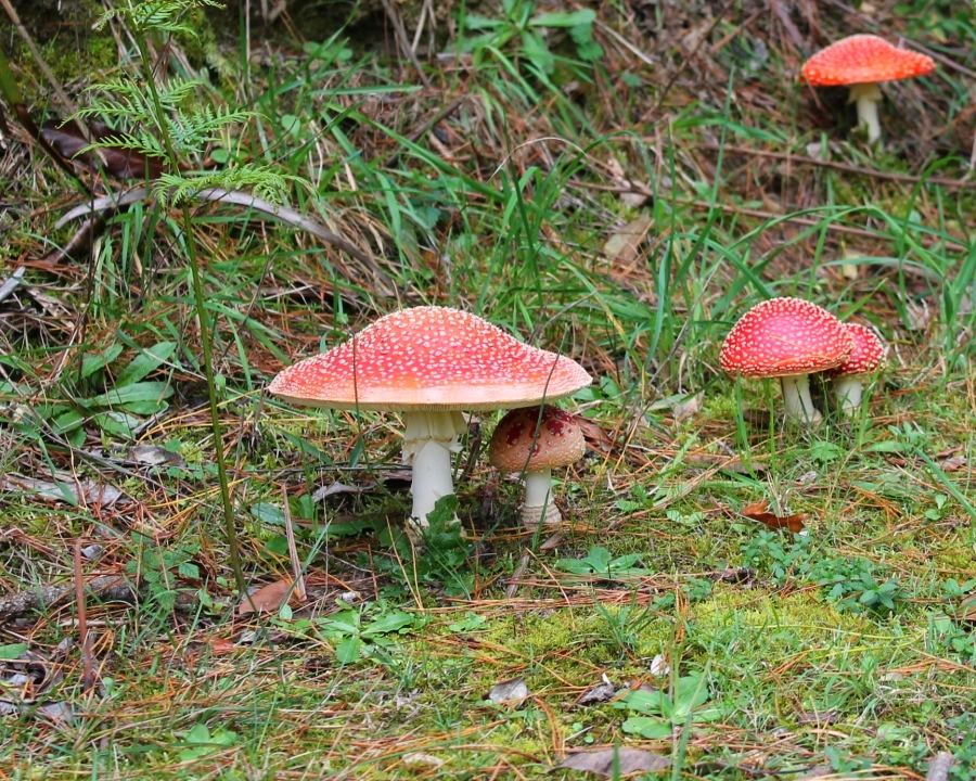Toadstools in our local area