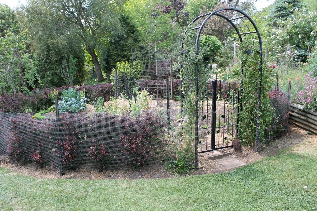 A veggie garden