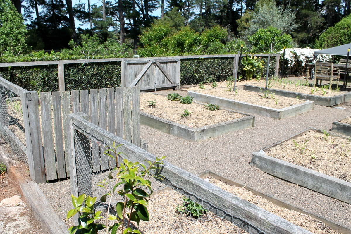 A veggie garden from the 2014 Garden Ramble.