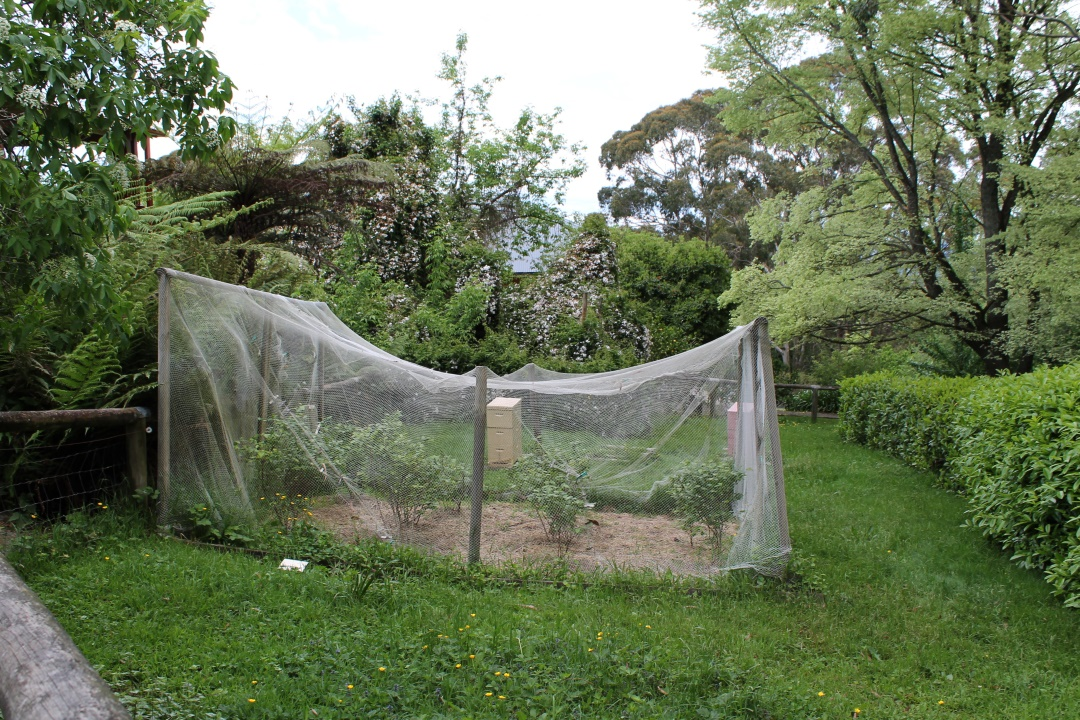 Garden bird netting.