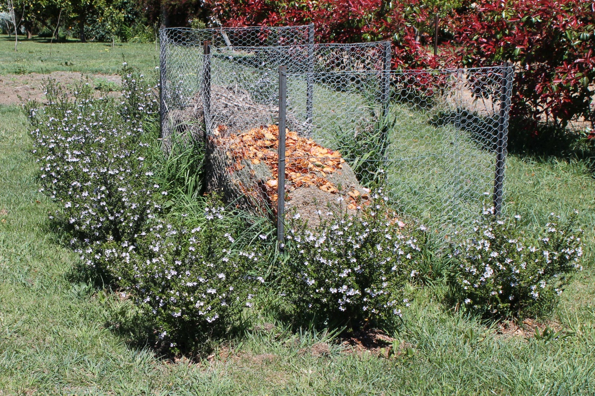 Westringia Glabra Plants